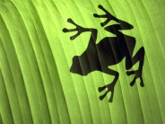 green-frog-shadow