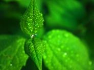 green-wet-leaves